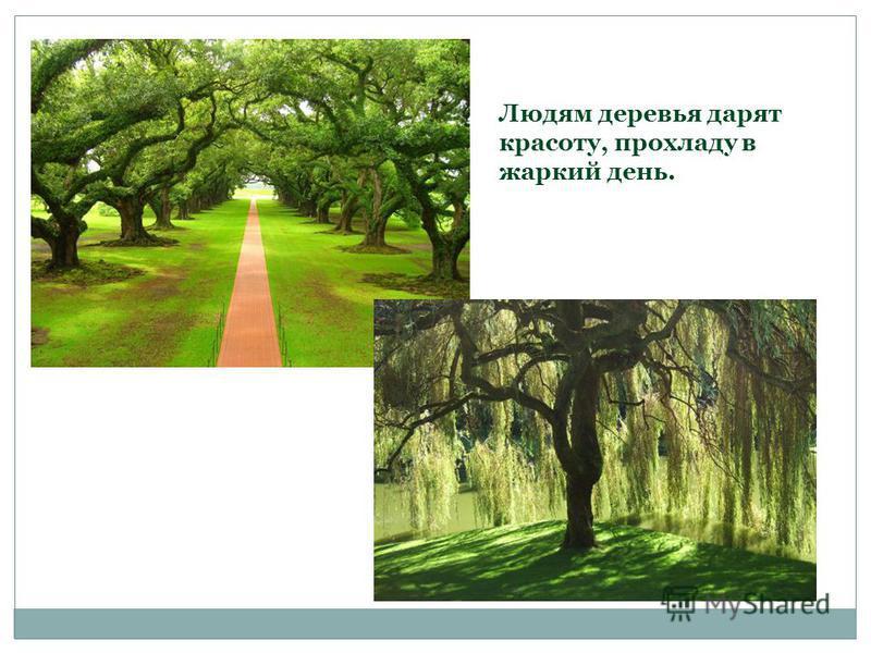 Людям деревья дарят красоту, прохладу в жаркий день.