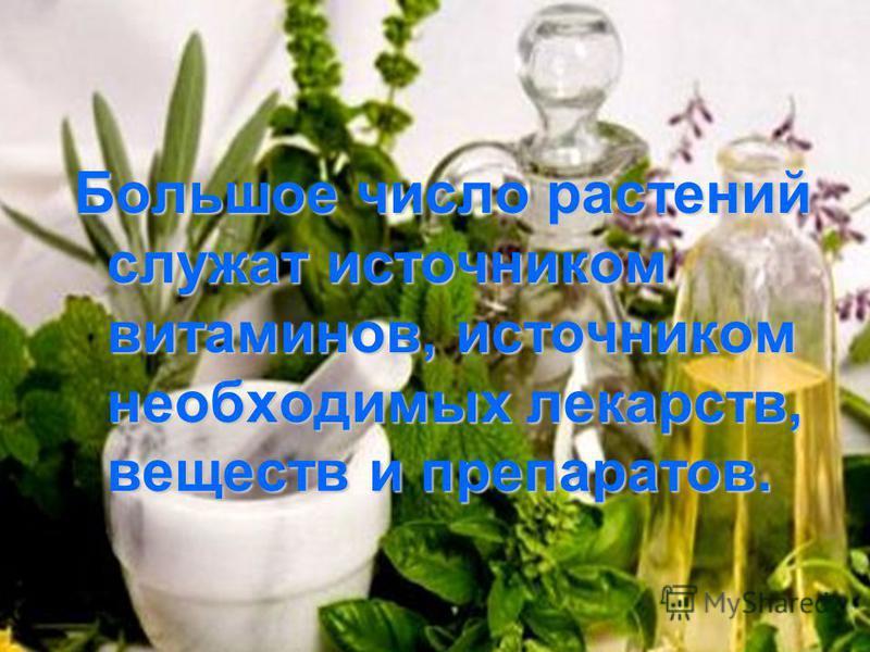 Большое число растений служат источником витаминов, источником необходимых лекарств, веществ и препаратов.