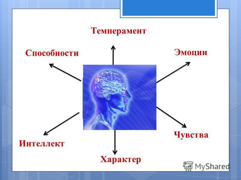 Темперамент Эмоции Чувства Характер Способности Интеллект Психологичес кий портрет личности