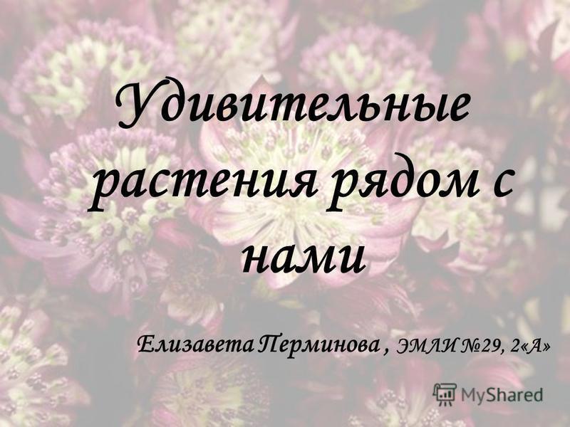 Удивительные растения рядом с нами Елизавета Перминова, ЭМЛИ 29, 2«А»