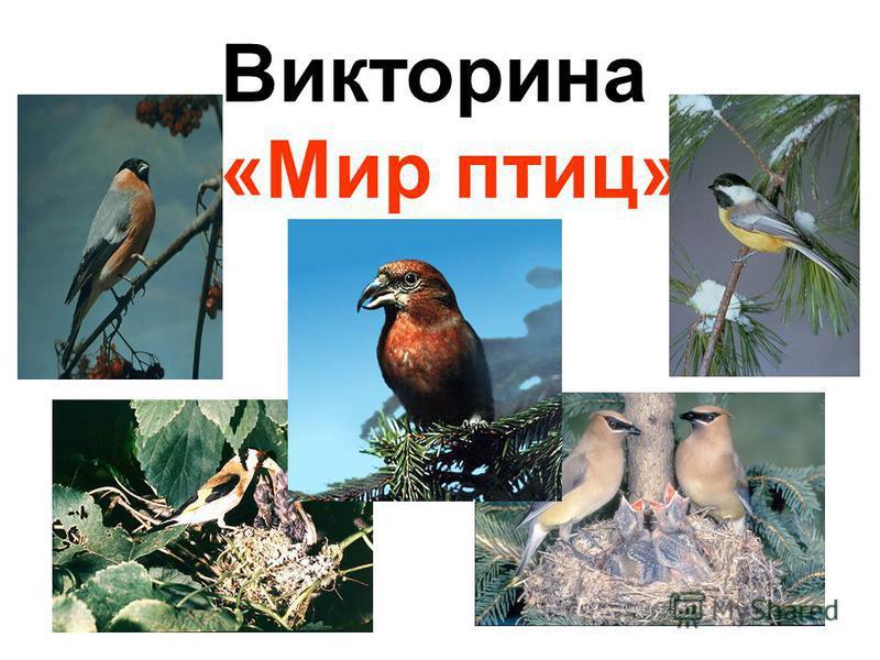 Викторина «Мир птиц»