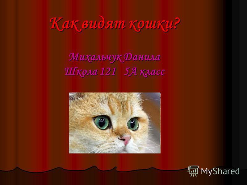 Как видят кошки? Михальчук Данила Школа 121 5А класс