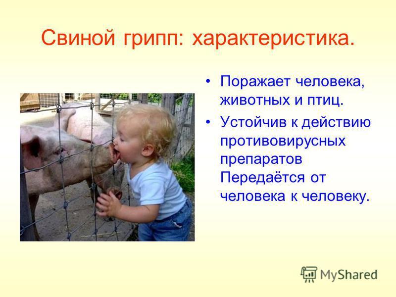 Свиной грипп: характеристика. Поражает человека, животных и птиц. Устойчив к действию противовирусных препаратов Передаётся от человека к человеку.