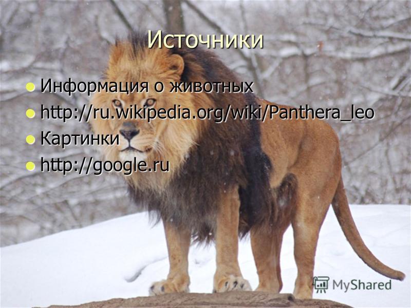 Источники Информация о животных Информация о животных http://ru.wikipedia.org/wiki/Panthera_leo http://ru.wikipedia.org/wiki/Panthera_leo Картинки Картинки http://google.ru http://google.ru