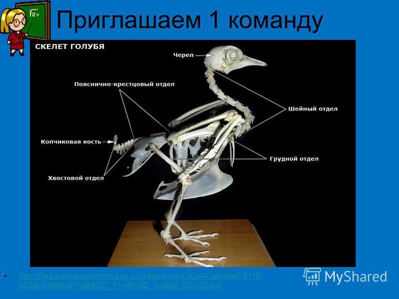 Приглашаем 1 команду http://files.school-collection.edu.ru/dlrstore/4b642a2e-42eb-49a7-9110- b039d31508b9/%5BBIO7_11-45%5D_%5BIM_02%5D.swfhttp://files.school-collection.edu.ru/dlrstore/4b642a2e-42eb-49a7-9110- b039d31508b9/%5BBIO7_11-45%5D_%5BIM_02%5