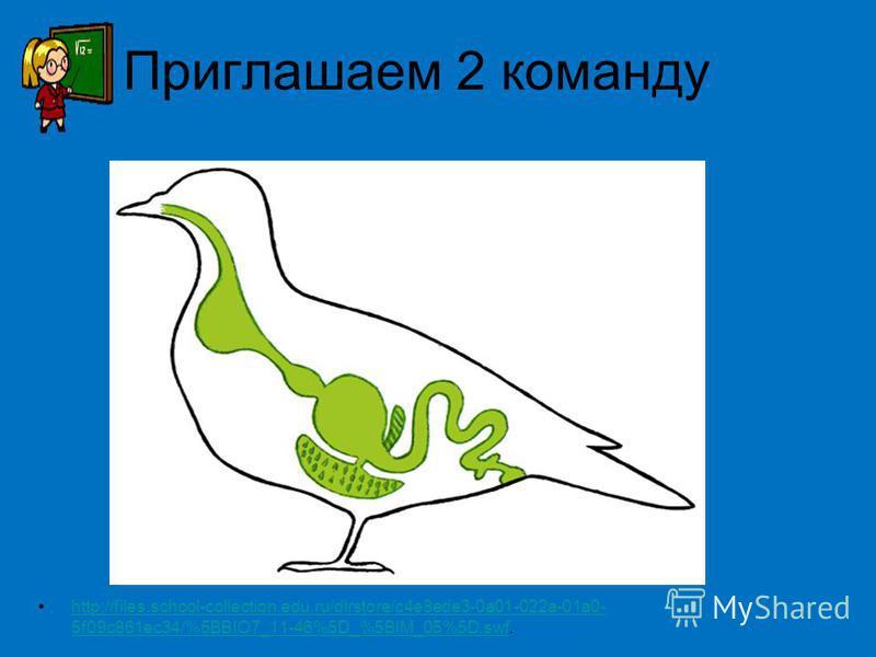 Приглашаем 2 команду http://files.school-collection.edu.ru/dlrstore/c4e8ede3-0a01-022a-01a0- 5f09c861ec34/%5BBIO7_11-46%5D_%5BIM_05%5D.swf.http://files.school-collection.edu.ru/dlrstore/c4e8ede3-0a01-022aa0- 5f09c861ec34/%5BBIO7_11-46%5D_%5BIM_05%5D.