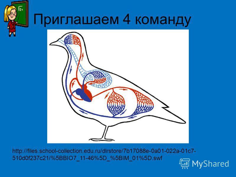 Приглашаем 4 команду http://files.school-collection.edu.ru/dlrstore/7b17088e-0a01-022a-01c7- 510d0f237c21/%5BBIO7_11-46%5D_%5BIM_01%5D.swf