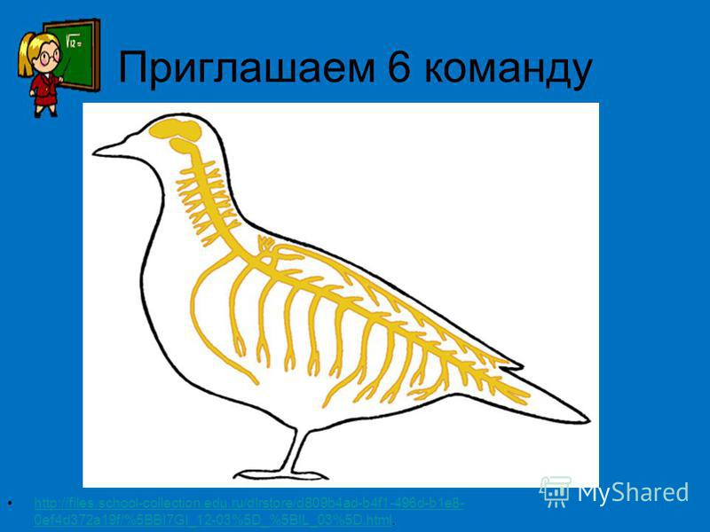 Приглашаем 6 команду http://files.school-collection.edu.ru/dlrstore/d809b4ad-b4f1-496d-b1e8- 0ef4d372a19f/%5BBI7GI_12-03%5D_%5BIL_03%5D.html.http://files.school-collection.edu.ru/dlrstore/d809b4ad-b4f1-496d-b1e8- 0ef4d372a19f/%5BBI7GI_12-03%5D_%5BIL_