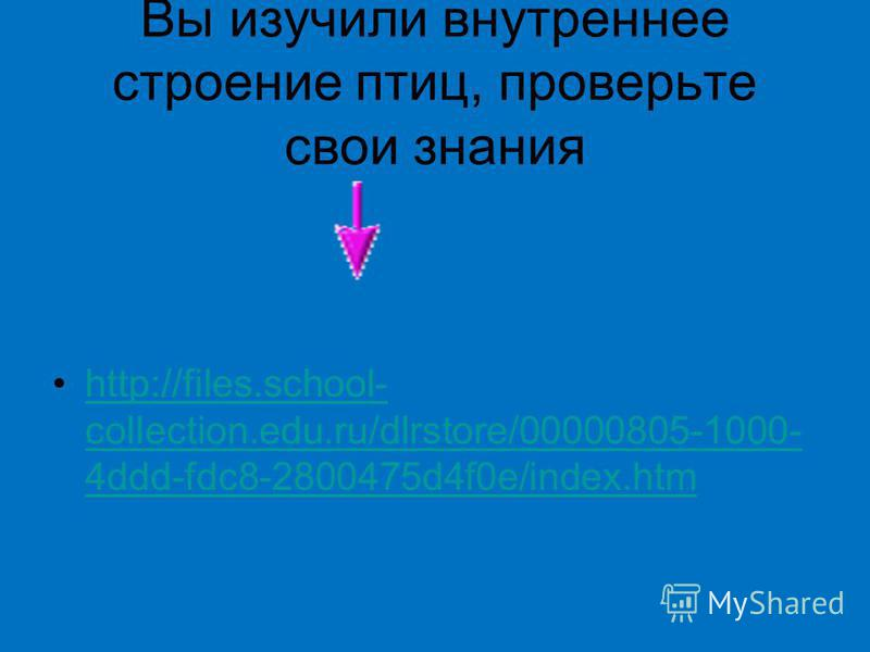 Вы изучили внутреннее строение птиц, проверьте свои знания http://files.school- collection.edu.ru/dlrstore/00000805-1000- 4ddd-fdc8-2800475d4f0e/index.htmhttp://files.school- collection.edu.ru/dlrstore/00000805-1000- 4ddd-fdc8-2800475d4f0e/index.htm