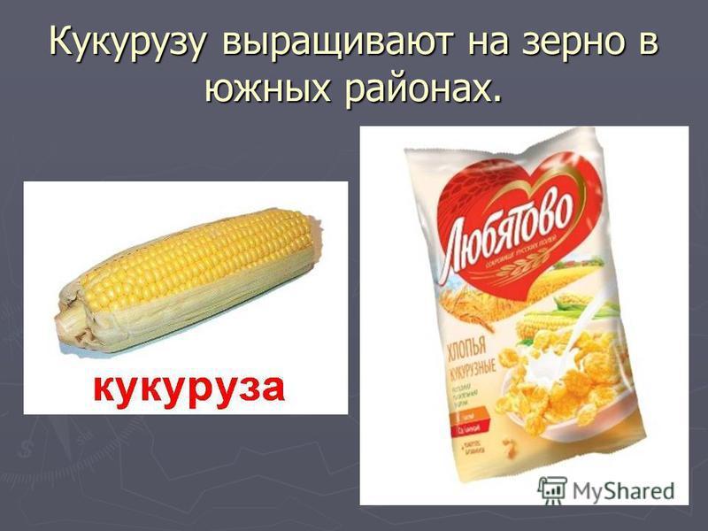 Кукурузу выращивают на зерно в южных районах.