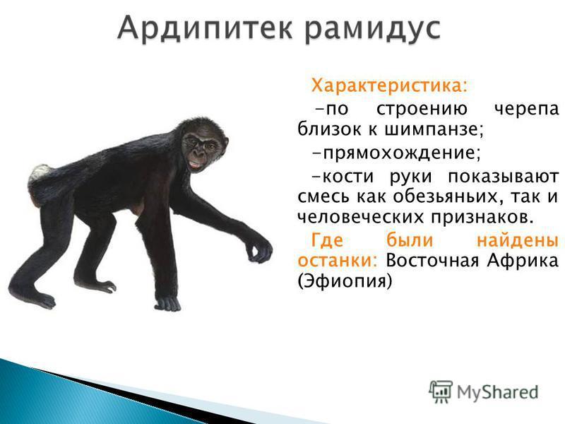 Характеристика: ; -по строению черепа близок к шимпанзе; -прямохождение; -кости руки показывают смесь как обезьяньих, так и человеческих признаков. Где были найдены останки: Восточная Африка (Эфиопия)