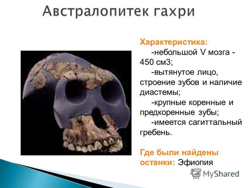 Характеристика: -небольшой V мозга - 450 см 3; -вытянутое лицо, строение зубов и наличие диастемы; -крупные коренные и предкоренные зубы; -имеется сагиттальный гребень. Где были найдены останки: Эфиопия