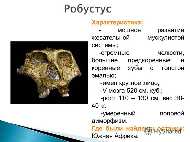 Характеристика: - мощное развитие жевательной мускулистой системы; -огромные челюсти, большие предкоренные и коренные зубы с толстой эмалью; -имел круглое лицо; -V мозга 520 см. куб.; -рост 110 – 130 см, вес 30- 40 кг. -умеренный половой диморфизм. Г