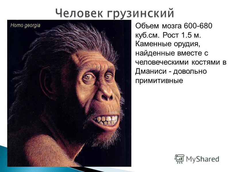 Объем мозга 600-680 куб.см. Рост 1.5 м. Каменные орудия, найденные вместе с человеческими костями в Дманиси - довольно примитивные