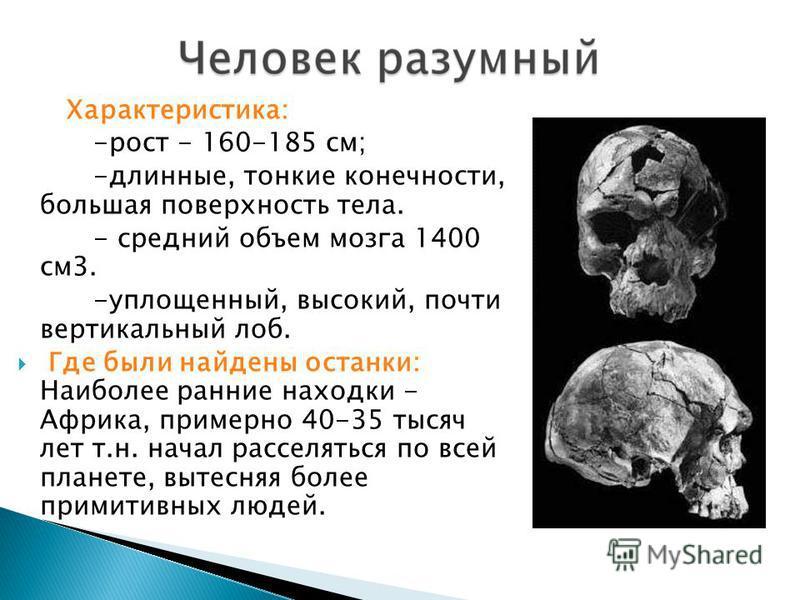 Характеристика: -рост - 160-185 см; -длинные, тонкие конечности, большая поверхность тела. - средний объем мозга 1400 см 3. -уплощенный, высокий, почти вертикальный лоб. Где были найдены останки: Наиболее ранние находки - Африка, примерно 40-35 тысяч