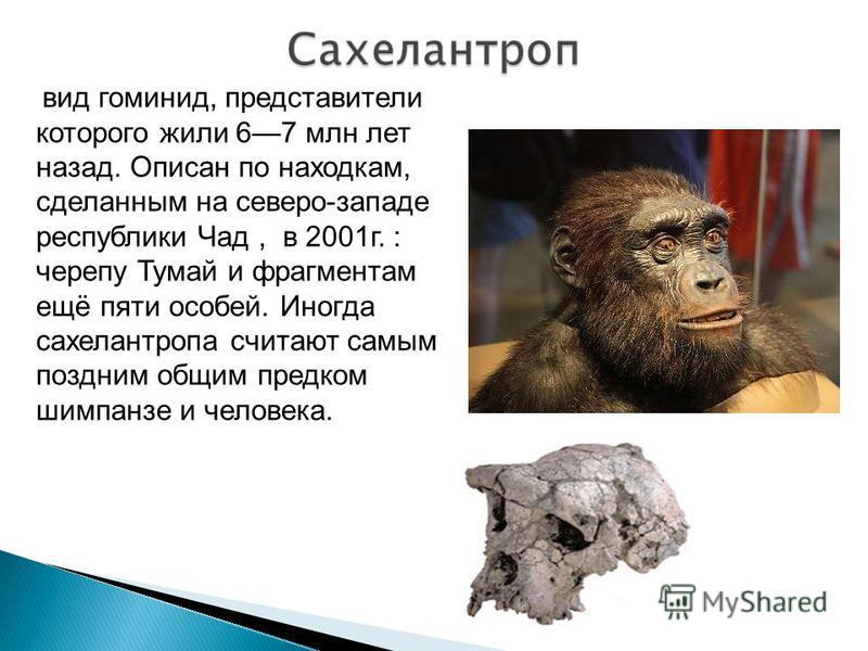 вид гоминид, представители которого жили 67 млн лет назад. Описан по находкам, сделанным на северо-западе республики Чад, в 2001 г. : черепу Тумай и фрагментам ещё пяти особей. Иногда сахелантропа считают самым поздним общим предком шимпанзе и челове