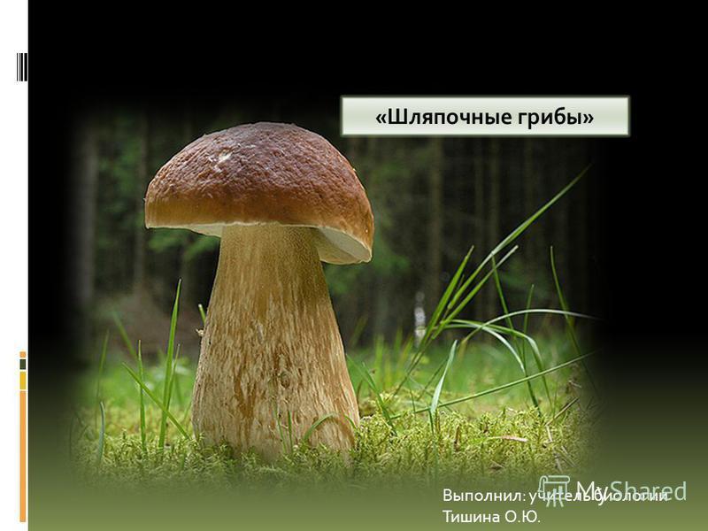 «Шляпочные грибы» Выполнил: учитель биологии Тишина О.Ю.