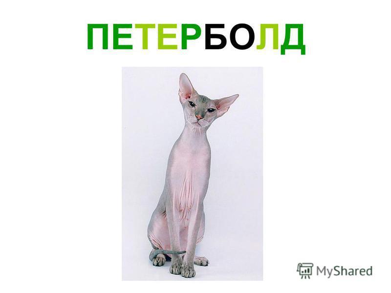 ПЕТЕРБОЛД