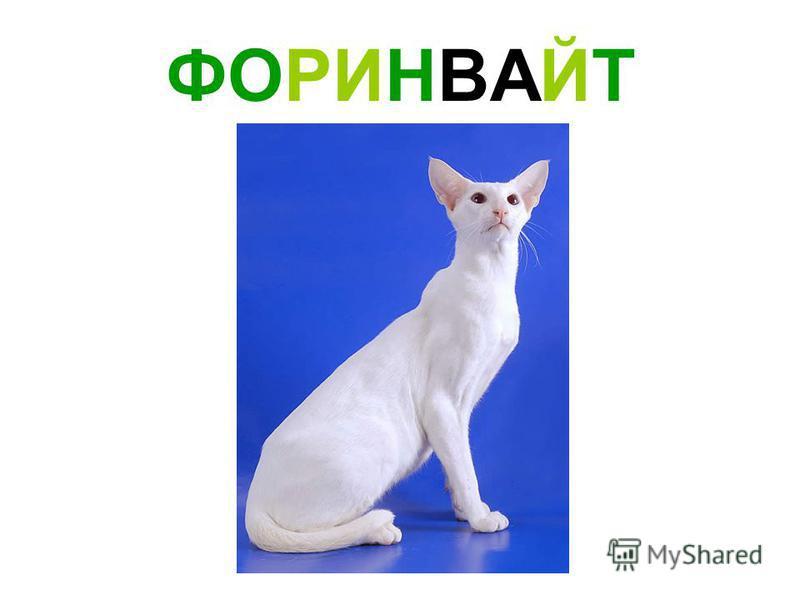 ФОРИНВАЙТ