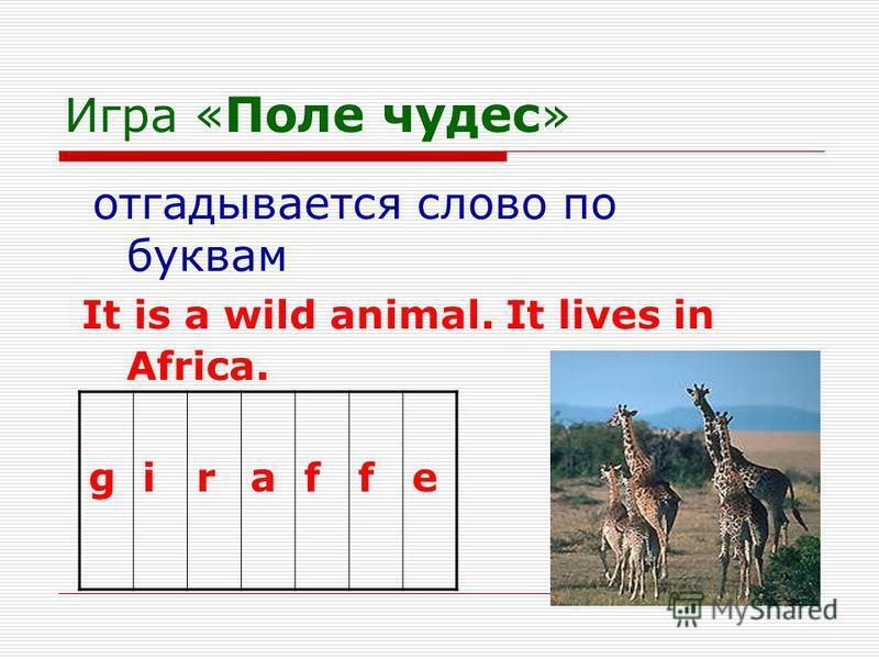 Игра « Поле чудес » отгадывается слово по буквам It is a wild animal. It lives in Africa. giraffe