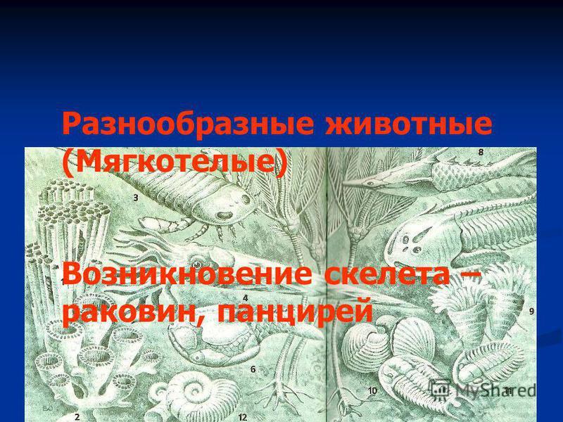 Разнообразные животные (Мягкотелые) Возникновение скелета – раковин, панцирей