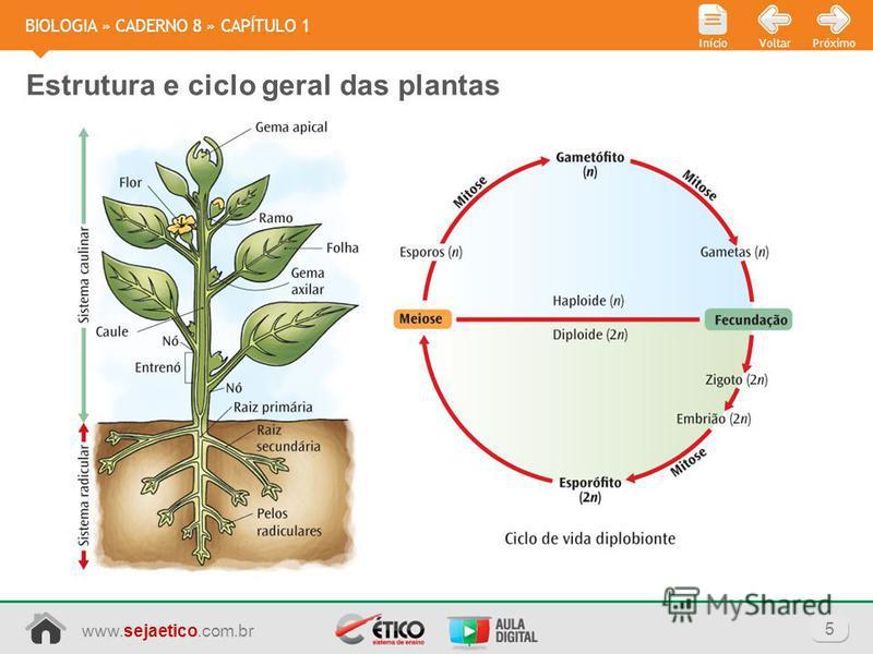 www.sejaetico.com.br 5 PróximoVoltarInício BIOLOGIA » CADERNO 8 » CAPÍTULO 1 Estrutura e ciclo geral das plantas