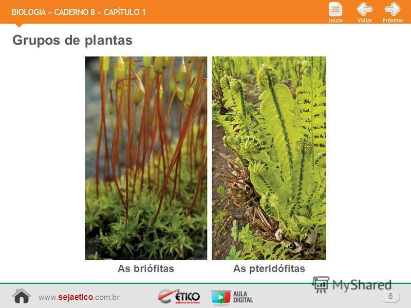 www.sejaetico.com.br 6 PróximoVoltarInício BIOLOGIA » CADERNO 8 » CAPÍTULO 1 Grupos de plantas As briófitasAs pteridófitas