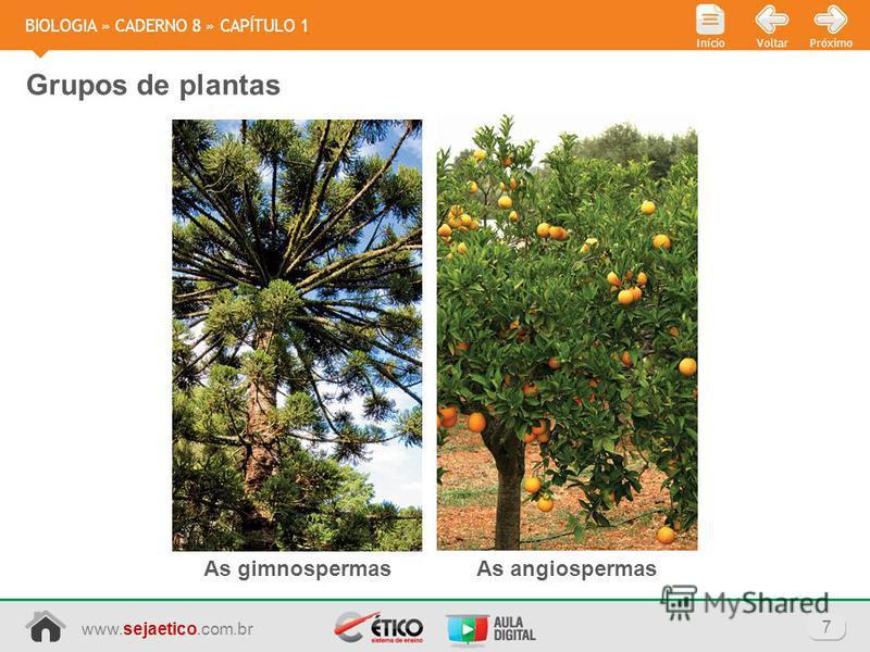 www.sejaetico.com.br 7 PróximoVoltarInício BIOLOGIA » CADERNO 8 » CAPÍTULO 1 Grupos de plantas As gimnospermasAs angiospermas