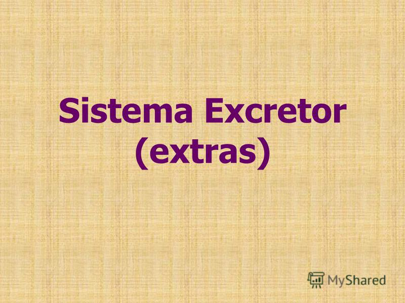 Sistema Excretor (extras)
