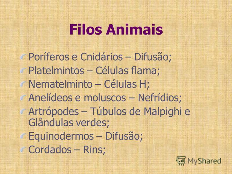 Filos Animais Poríferos e Cnidários – Difusão; Platelmintos – Células flama; Nematelminto – Células H; Anelídeos e moluscos – Nefrídios; Artrópodes – Túbulos de Malpighi e Glândulas verdes; Equinodermos – Difusão; Cordados – Rins;