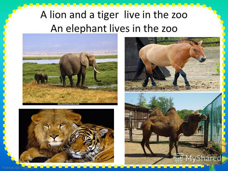 FokinaLida.75@mail.ru A lion and a tiger live in the zoo An elephant lives in the zoo