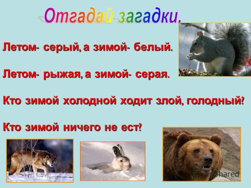 Летом - серый, а зимой - белый. Летом - рыжая, а зимой - серая. Кто зимой холодной ходит злой, голодный ? Кто зимой ничего не ест ?
