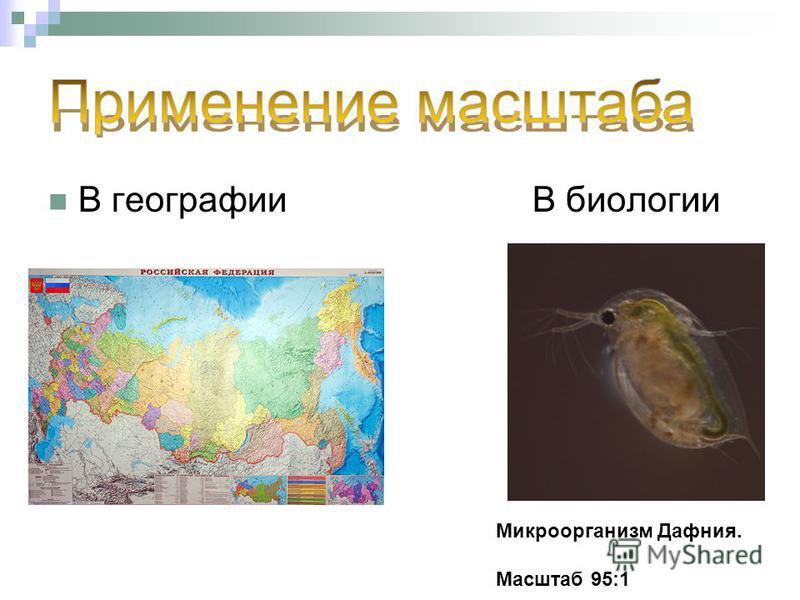 В географии В биологии Микроорганизм Дафния. Масштаб 95:1