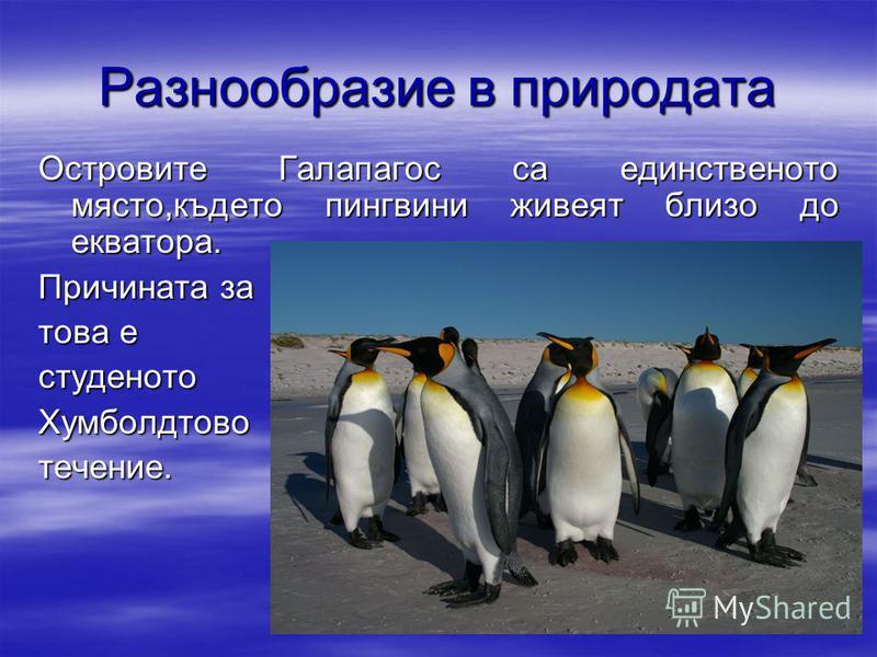 Разнообразие в природата Островите Галапагос са единственото място,където пингвини живеят близо до екватора. Причината за това е студенотоХумболдтовотечение.