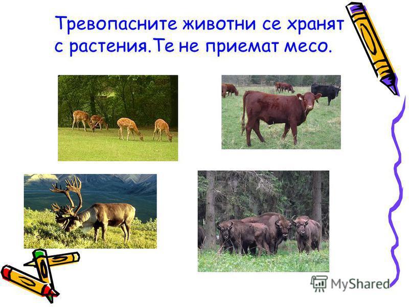 Тревопасните животни се хранят с растения.Те не приемат месо.