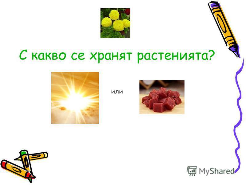 С какво се хранят растенията? или