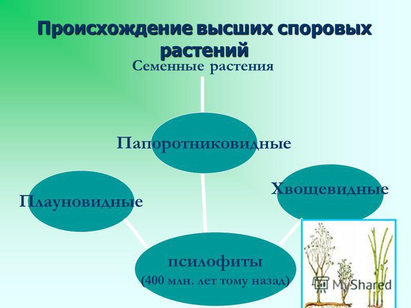 Происхождение высших споровых растений псилофиты (400 млн. лет тому назад) Плауновидные Папоротниковидные Хвощевидные Семенные растения