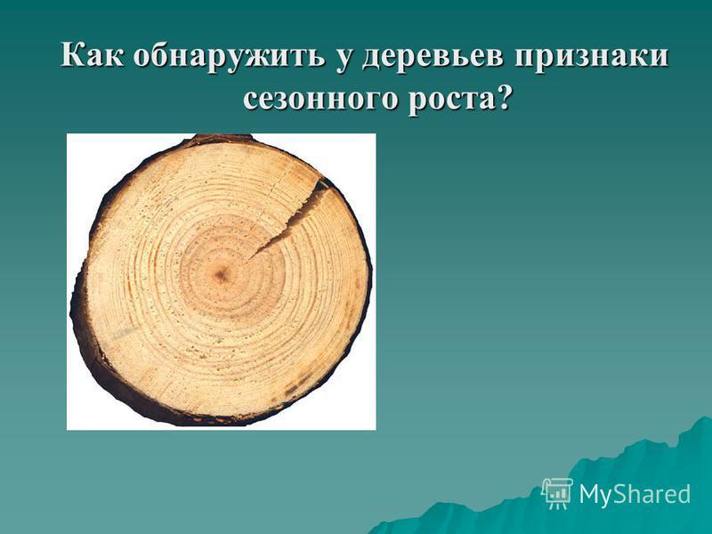 Как обнаружить у деревьев признаки сезонного роста?