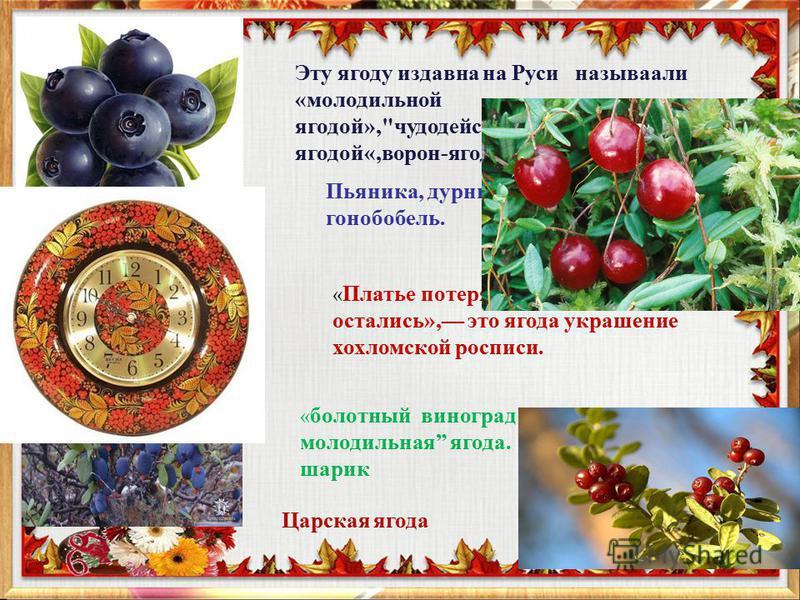 Эту ягоду издавна на Руси называли «молодильной ягодой»,