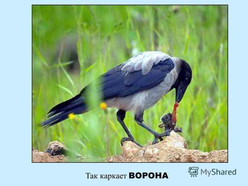 А это звенит птичка СИНИЧКА А это звенит птичка синичка
