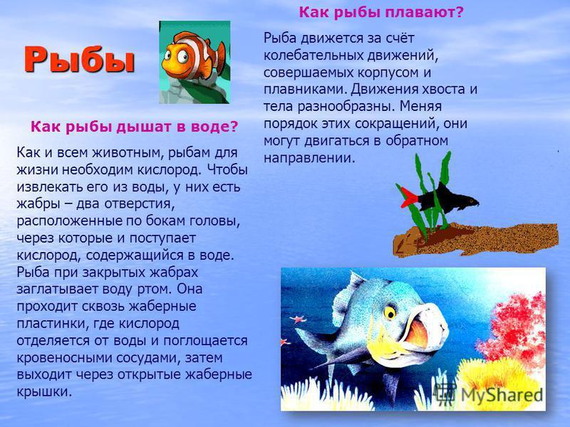 Рыбы Как рыбы плавают? Рыба движется за счёт колебательных движений, совершаемых корпусом и плавниками. Движения хвоста и тела разнообразны. Меняя порядок этих сокращений, они могут двигаться в обратном направлении. Как рыбы дышат в воде? Как и всем