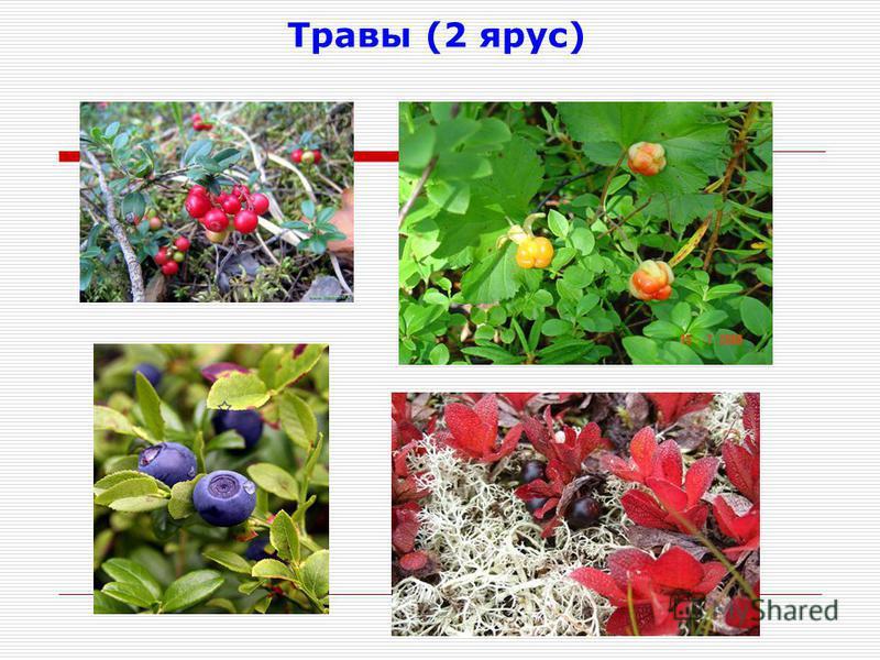 Травы (2 ярус)