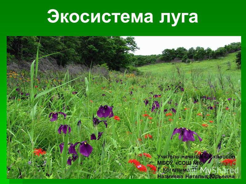 Экосистема луга Учитель начальных классов МБОУ «СОШ 6» Г. Когалыма Назмиева Наталья Юрьевна