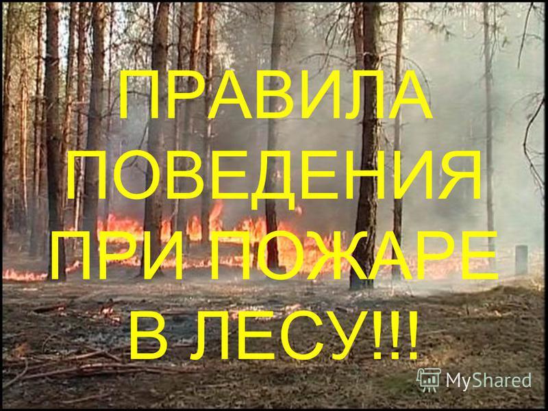 ПРАВИЛА ПОВЕДЕНИЯ ПРИ ПОЖАРЕ В ЛЕСУ!!!