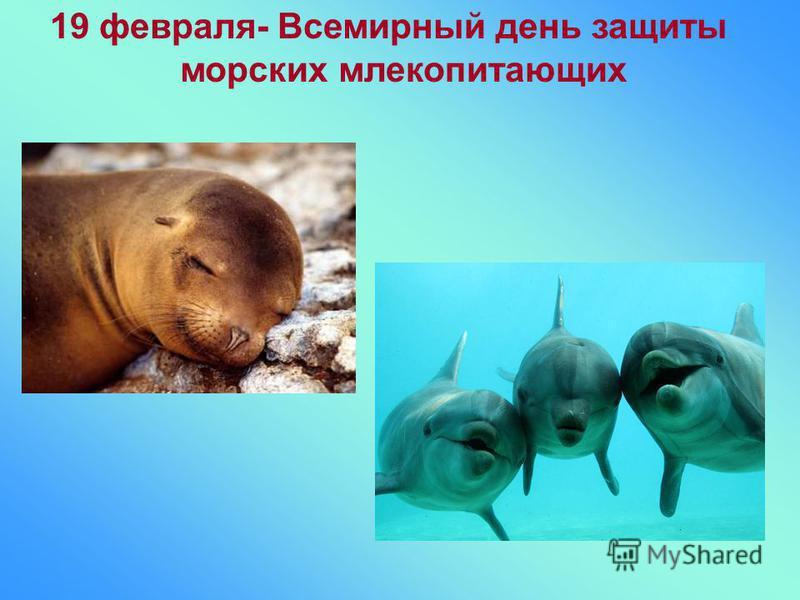 19 февраля- Всемирный день защиты морских млекопитающих