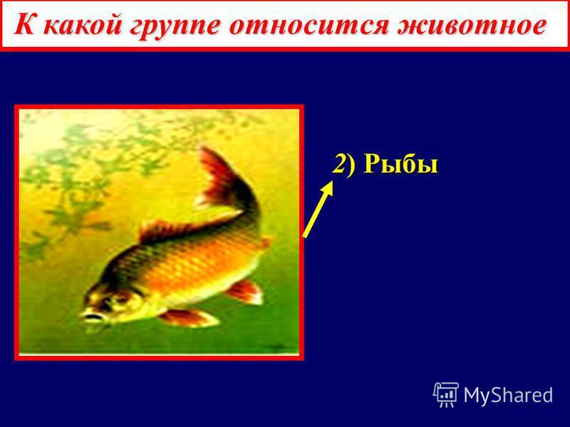 К какой группе относится животное 1) Насекомые 1) Насекомые 2) Рыбы 2) Рыбы 3) Паукообразные 3) Паукообразные 4) Ракообразные 4) Ракообразные 5) Земноводные 5) Земноводные