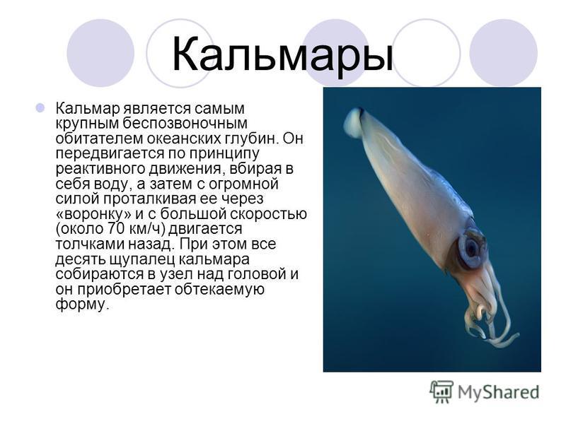 Кальмары Кальмар является самым крупным беспозвоночным обитателем океанских глубин. Он передвигается по принципу реактивного движения, вбирая в себя воду, а затем с огромной силой проталкивая ее через «воронку» и с большой скоростью (около 70 км/ч) д