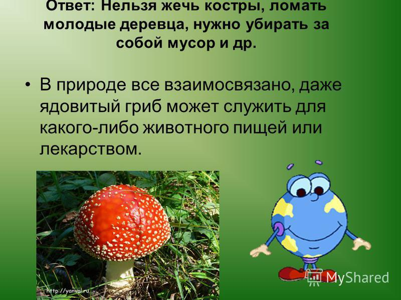 Каким должно быть поведение человека в лесу? Вы увидели в лесу грибы мухоморы. Что вы будете делать?