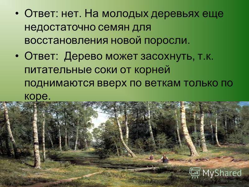 Будете ли вы вырубать все старые деревья в лесу? - Почему нельзя кору с дерева кольцом обдирать?