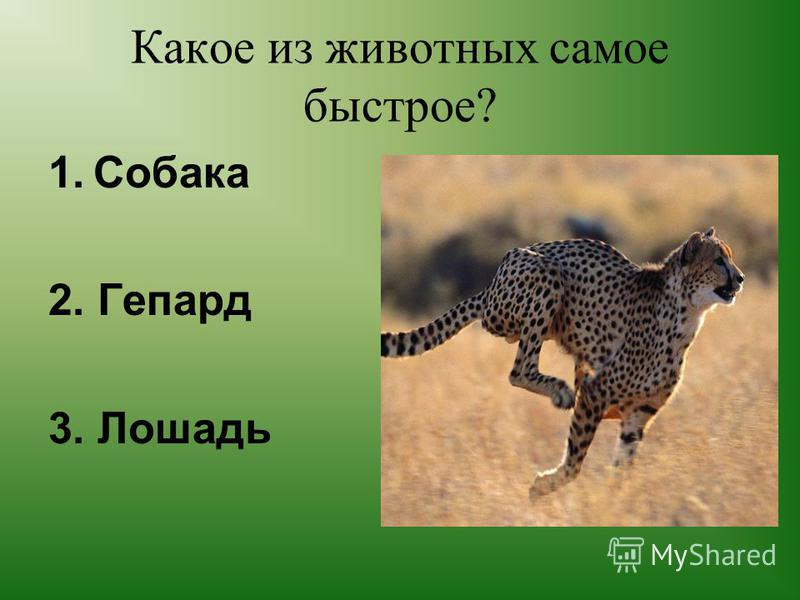 Какое животное умеет летать? 1. Пингвин 2. Страус 3. Летучая мышь
